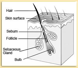 human hair 01
